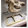 37.晴天小熊-自然科學博物館-從龍到獸,穿越化石代