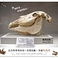 39.晴天小熊-自然科學博物館-從龍到獸,穿越化石代