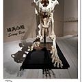 41.晴天小熊-自然科學博物館-從龍到獸,穿越化石代