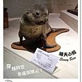 42.晴天小熊-自然科學博物館-從龍到獸,穿越化石代