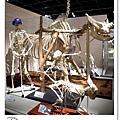 43.晴天小熊-自然科學博物館-從龍到獸,穿越化石代