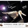 46.晴天小熊-自然科學博物館-從龍到獸,穿越化石代