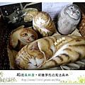 16.晴天小熊-相遇森林屋-彩繪夢想的魔法森林
