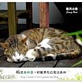 17.晴天小熊-相遇森林屋-彩繪夢想的魔法森林