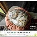 18.晴天小熊-相遇森林屋-彩繪夢想的魔法森林