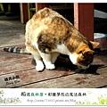 39.晴天小熊-相遇森林屋-彩繪夢想的魔法森林