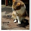 41.晴天小熊-相遇森林屋-彩繪夢想的魔法森林