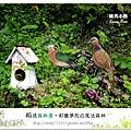 50.晴天小熊-相遇森林屋-彩繪夢想的魔法森林