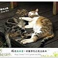 55.晴天小熊-相遇森林屋-彩繪夢想的魔法森林