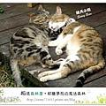 57.晴天小熊-相遇森林屋-彩繪夢想的魔法森林