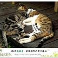 59.晴天小熊-相遇森林屋-彩繪夢想的魔法森林