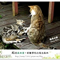 61.晴天小熊-相遇森林屋-彩繪夢想的魔法森林