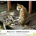 62.晴天小熊-相遇森林屋-彩繪夢想的魔法森林