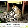 63.晴天小熊-相遇森林屋-彩繪夢想的魔法森林