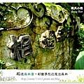 64.晴天小熊-相遇森林屋-彩繪夢想的魔法森林