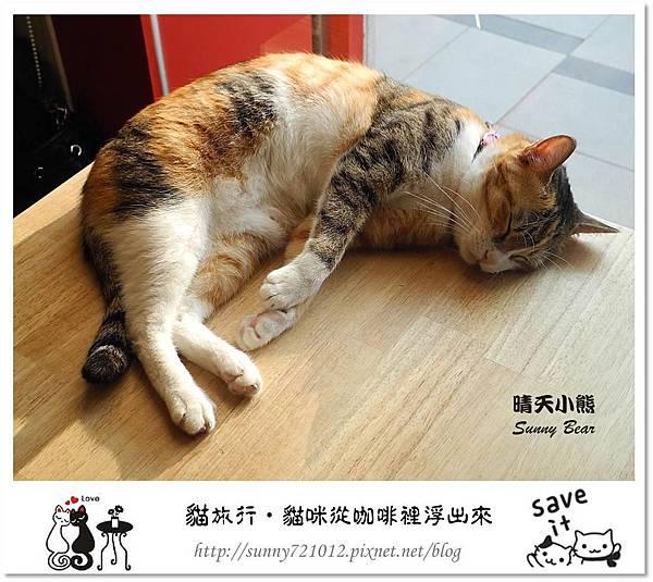 39.晴天小熊-貓‧旅行-貓咪從咖啡裡浮出來