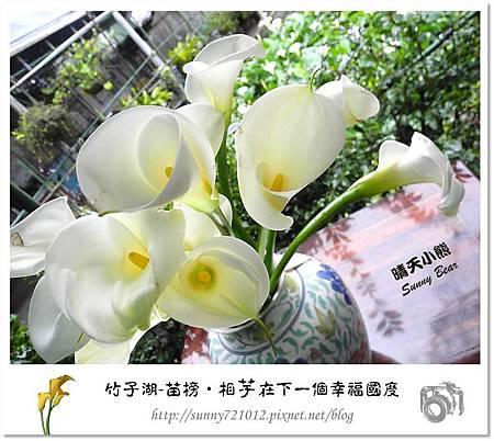 13.晴天小熊-陽明山竹子湖-苗榜-相芋在下一個幸福國度