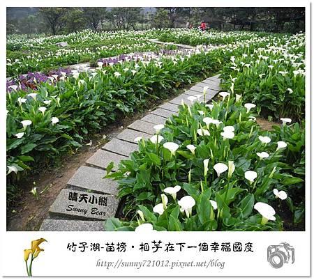 15.晴天小熊-陽明山竹子湖-苗榜-相芋在下一個幸福國度