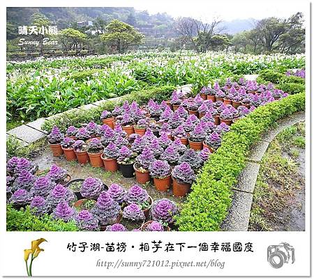 23.晴天小熊-陽明山竹子湖-苗榜-相芋在下一個幸福國度