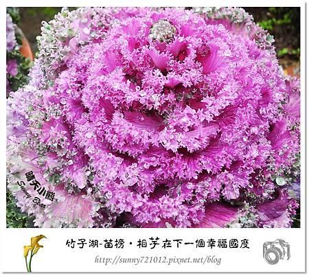28.晴天小熊-陽明山竹子湖-苗榜-相芋在下一個幸福國度
