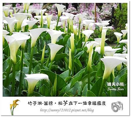 29.晴天小熊-陽明山竹子湖-苗榜-相芋在下一個幸福國度