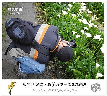 53.晴天小熊-陽明山竹子湖-苗榜-相芋在下一個幸福國度