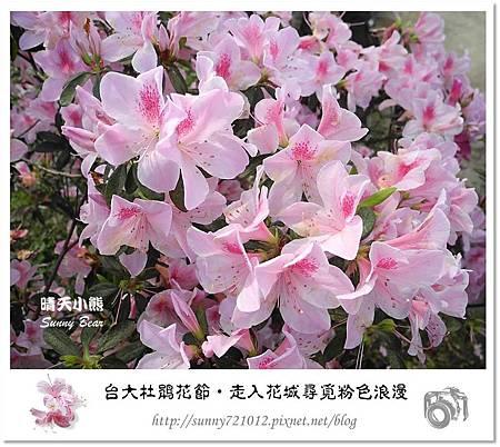 20.晴天小熊-台大杜鵑花節-走入花城尋覓粉色浪漫