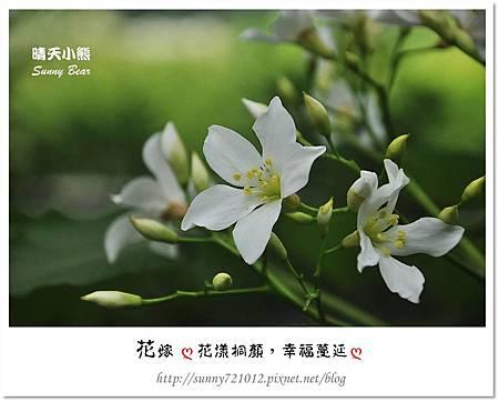 3.晴天小熊-花嫁ღ 花漾桐顏,幸福蔓延 ღ