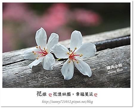 8.晴天小熊-花嫁ღ 花漾桐顏,幸福蔓延 ღ