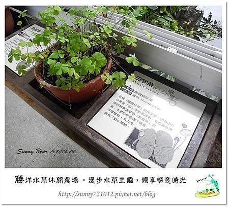 35.晴天小熊-勝洋水草休閒農場-漫步水草王國,獨享愜意時光