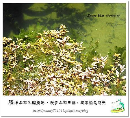 56.晴天小熊-勝洋水草休閒農場-漫步水草王國,獨享愜意時光