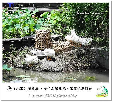 57.晴天小熊-勝洋水草休閒農場-漫步水草王國,獨享愜意時光