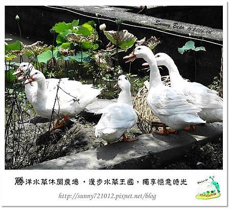 58.晴天小熊-勝洋水草休閒農場-漫步水草王國,獨享愜意時光