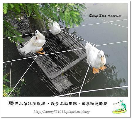59.晴天小熊-勝洋水草休閒農場-漫步水草王國,獨享愜意時光