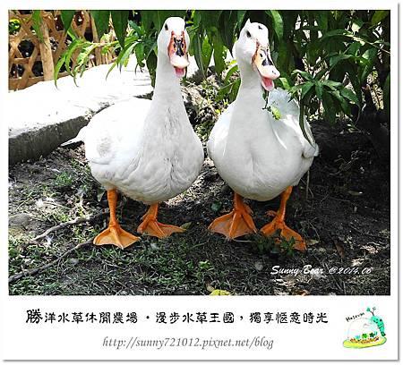 60.晴天小熊-勝洋水草休閒農場-漫步水草王國,獨享愜意時光
