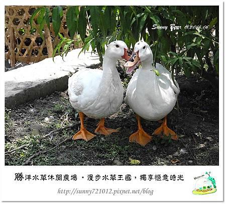 61.晴天小熊-勝洋水草休閒農場-漫步水草王國,獨享愜意時光