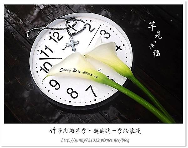 1.晴天小熊-竹子湖海芋季-邂逅這一季的浪漫.jpg