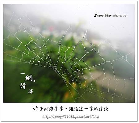 2.晴天小熊-竹子湖海芋季-邂逅這一季的浪漫.jpg