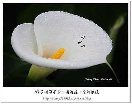 3.晴天小熊-竹子湖海芋季-邂逅這一季的浪漫.jpg