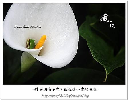 5.晴天小熊-竹子湖海芋季-邂逅這一季的浪漫.jpg