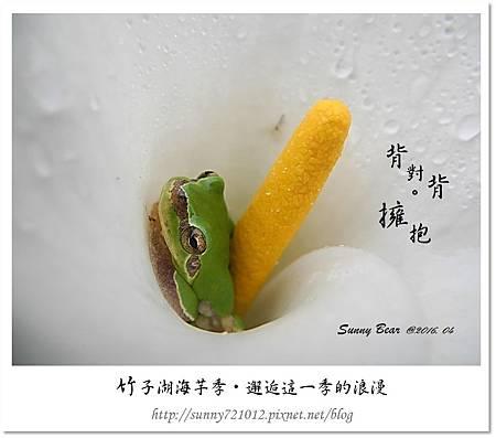 6.晴天小熊-竹子湖海芋季-邂逅這一季的浪漫.jpg