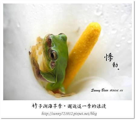 7.晴天小熊-竹子湖海芋季-邂逅這一季的浪漫.jpg