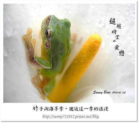 8.晴天小熊-竹子湖海芋季-邂逅這一季的浪漫.jpg