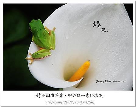 9.晴天小熊-竹子湖海芋季-邂逅這一季的浪漫.jpg