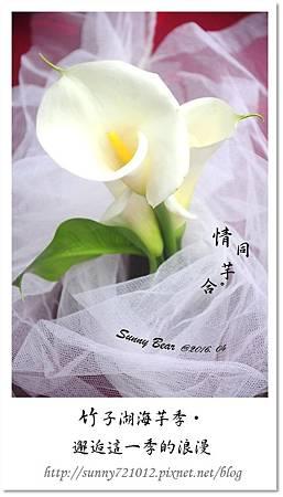 10.晴天小熊-竹子湖海芋季-邂逅這一季的浪漫.jpg