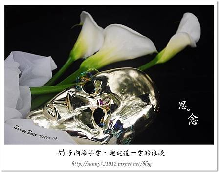 13.晴天小熊-竹子湖海芋季-邂逅這一季的浪漫.jpg