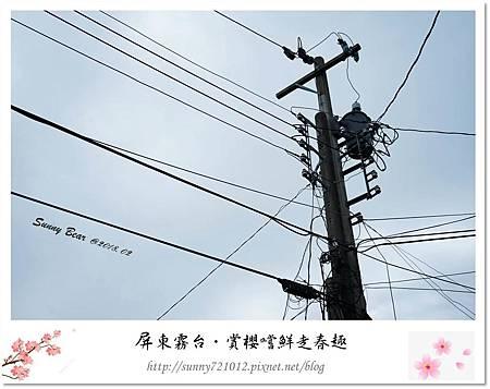 4.晴天小熊-賞櫻嚐鮮走春趣.jpg