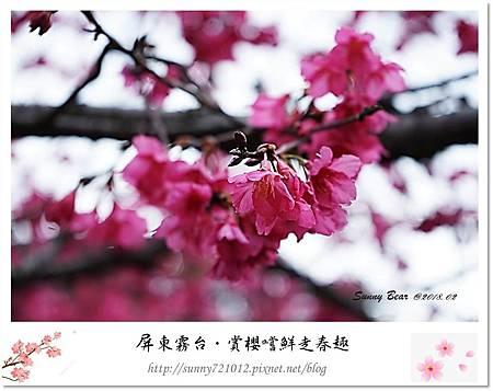 6.晴天小熊-賞櫻嚐鮮走春趣.jpg