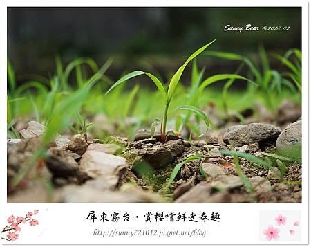 21.晴天小熊-賞櫻嚐鮮走春趣.jpg