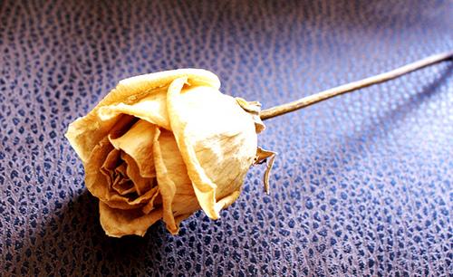 old rose.bmp